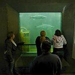 Ballard Fish Ladder Seattle, USA