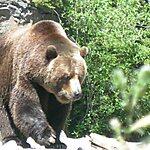 Woodland Park Zoo Seattle, USA