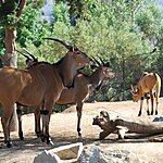 San Diego Zoo Safari Park San Diego, USA