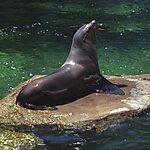 Vancouver Aquarium Vancouver