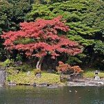 小石川後楽園 Tokyo, Japan