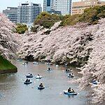 千鳥ヶ淵公園 Tokyo, Japan