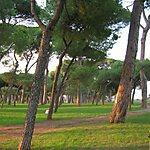 Pineta Sacchetti Rome, Italy