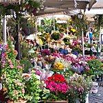 Mercato di Campo de' Fiori Rome, Italy