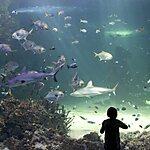 SEA LIFE Sydney Aquarium Sydney, Australia