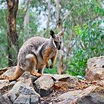 Featherdale Wildlife Park Sydney, Australia