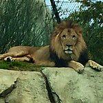 Dallas Zoo Dallas, USA