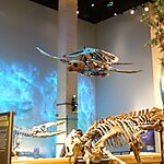 Perot Museum of Nature and Science Dallas, USA