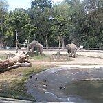 Zoo di Napoli Naples, Italy