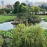 不忍池 Tokyo, Japan
