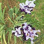 Il Giardino Dell'Iris Florence, Italy