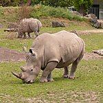 Dublin Zoo Dublin, Ireland
